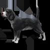 Poe2 pet backer dog Trixie icon.png