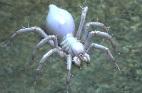 Ivory-Spiderling.jpg
