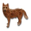 Poe2 pet backer dog Toby icon.png