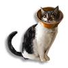 Poe2 pet animancy cat icon.png
