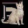Poe2 pet backer cat Noah icon.png