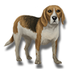 Pet beagle icon.png