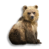 Poe2 pet bear icon.png