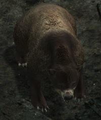 Elder-Bear.jpg