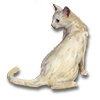 Poe2 pet backer cat Cajux icon.png