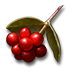 Ryngr berries icon.png