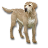 Poe2 pet backer dog Harley icon.png