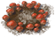 Icon Fairy Ring.png