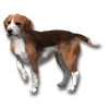 Poe2 pet backer dog Gizmo icon.png