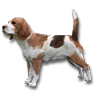 Poe2 pet backer dog Nalvi icon.png