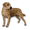 Poe2 pet backer dog Chili icon.png