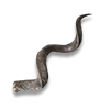 Poe2 antelope horn icon.png