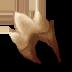 Stelgaer Tooth