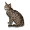 Poe2 pet backer cat Pozzi icon.png