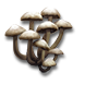Tyn hat icon.png