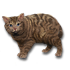 Poe2 pet backer cat Mirri icon.png