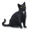 Poe2 pet backer cat Loki icon.png