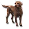 Poe2 pet backer dog Rex icon.png