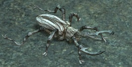 Wood-beetle.jpg