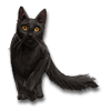 Poe2 pet backer cat Prissy icon.png