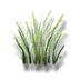 River reed icon.png