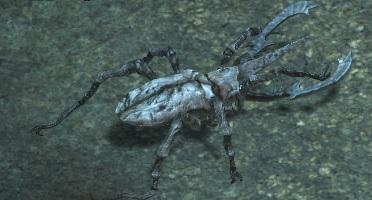 Stone-beetle.jpg