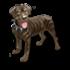 War Pup