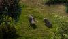 PE1 Elder Boar.png