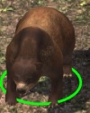 Bear-companion.jpg