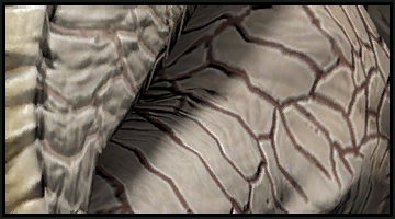 Kraken albino thumb.png