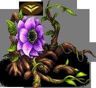 Antenolla A (Flower)