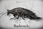 Roachstory.JPG