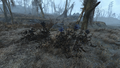 Fo4 Hubflower.png