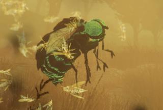 F76 New Entomology.png