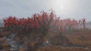 F76 Overgrown Sundew Grove.png