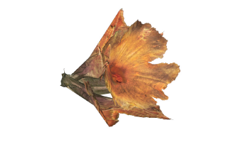 FO4GourdFlower.png