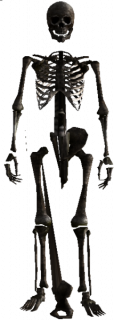 Skeleton.png