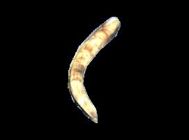 F76 Megasloth Claw.png