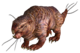 Mole rat FO3.png