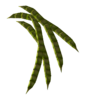 HoneyMesquitePod-nobg.png