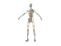 Gen1Skeleton.png