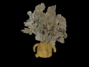 CarrotPlant.png