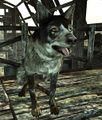Scavenger's Dog.jpg