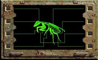 MantisCS.jpg