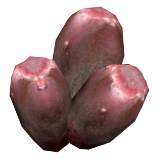 PricklyPearFruit2.png