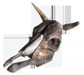 Brahmin Skull.png