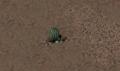 Fo2 Barrel Cactus.png