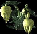 Punga fruit Plant 2.png