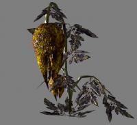 A wild punga plant