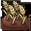 Crop Wheat plant.webp